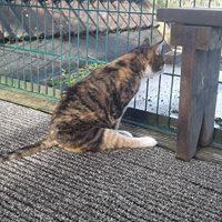 Sara, unsere zweite querschnittsgelähmte Katze
